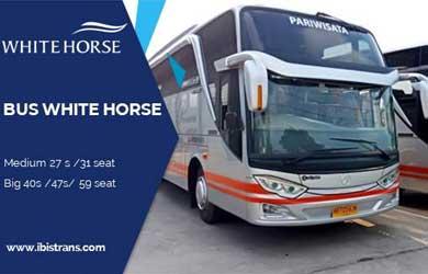 ibistrans.com bus pariwisata white horse