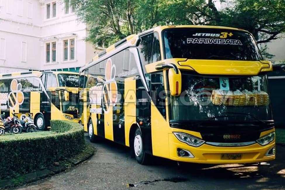 ibistrans.com gambar bus pariwisata BeeBuzz