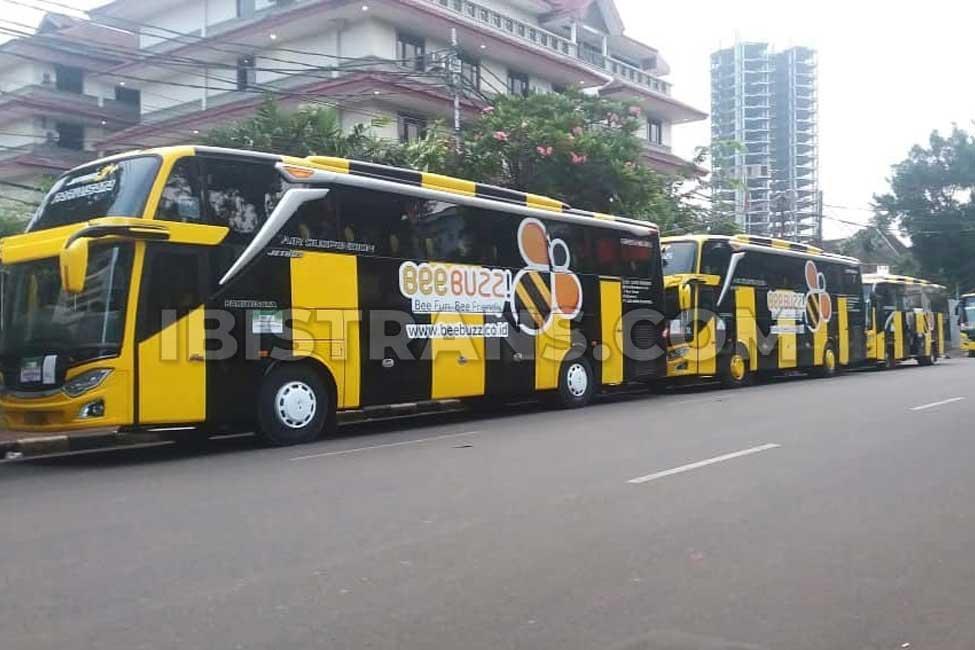 ibistrans.com harga bus pariwisata BeeBuzz