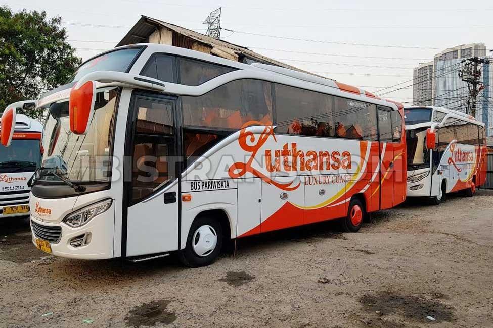 ibistrans.com sewa bus pariwisata medium luthansa