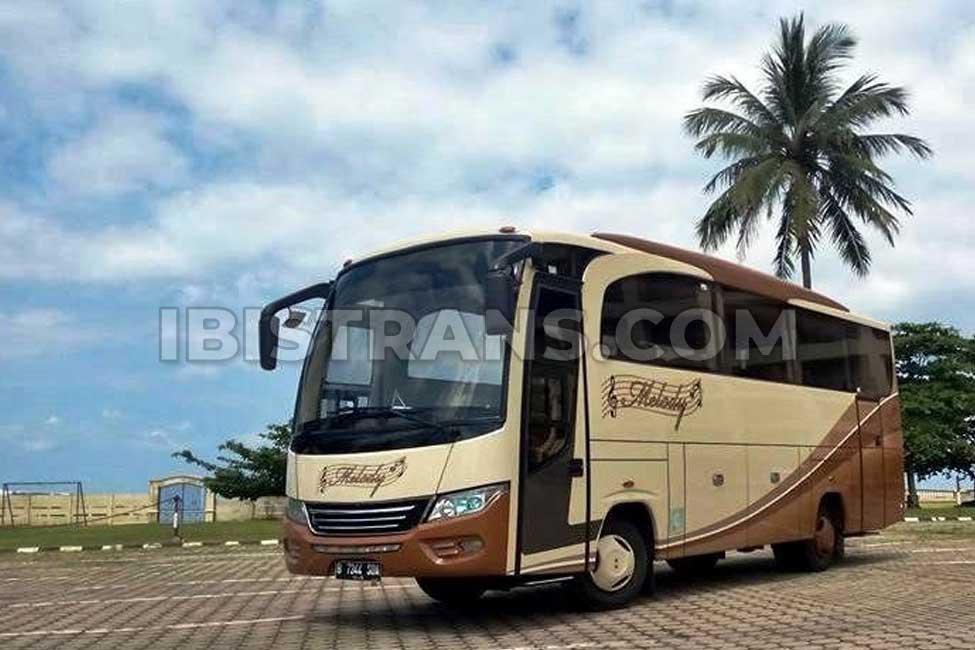 ibistrans.com sewa bus pariwisata medium melody transport